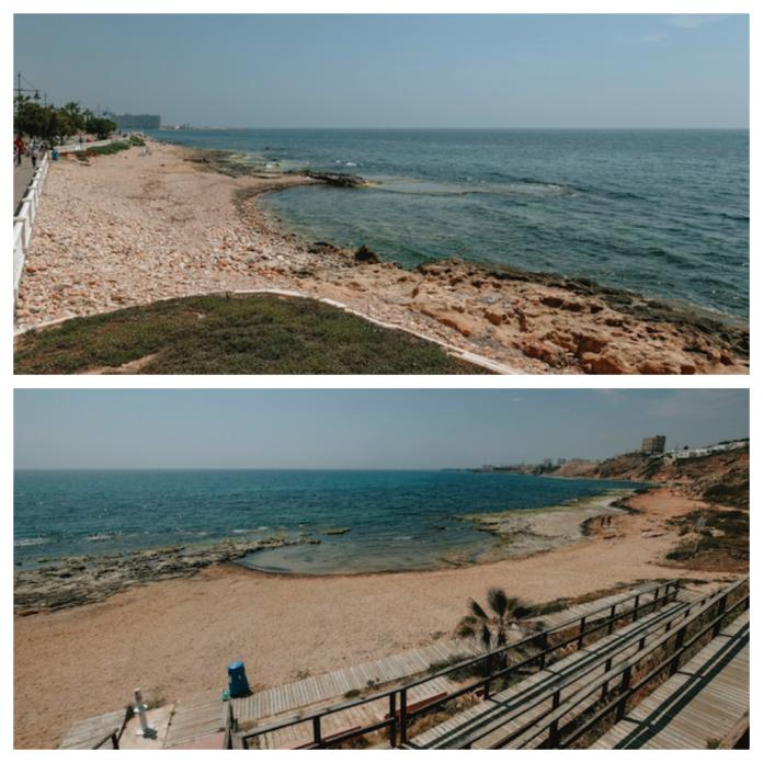 playas de perros